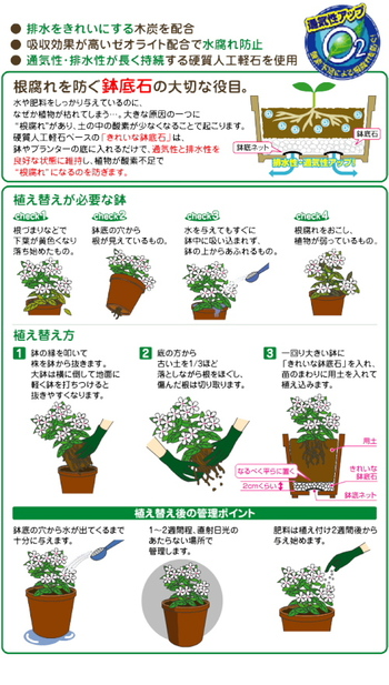 根づまりや根腐れの原因にもなるので、鉢底から根が見えていたり、水分が吸収されにくくなったら、植替えをしましょう。 植替え方は古い鉢からハーブを取り出し、3/1程の土を落とします。一回り大きい鉢に鉢底ネット鉢底石、用土の順番に入れ植え込むだけです。