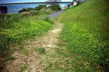 春の生き生きとした緑も鮮やかに表現。暖かな日のお散歩にも連れて行きたくなりますね。