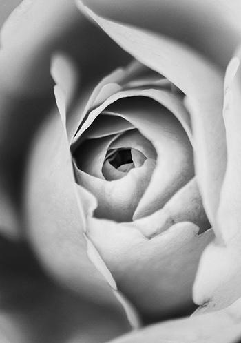 先にも述べましたが、モノクロ写真では色がない分、被写体の形や質感が見る側に伝わりやすくなります。そんな特徴を頭に入れて、身の回りのものを撮ってみましょう♪こちらの写真では、お花のしっとりとした柔らかさが伝わってきます。
