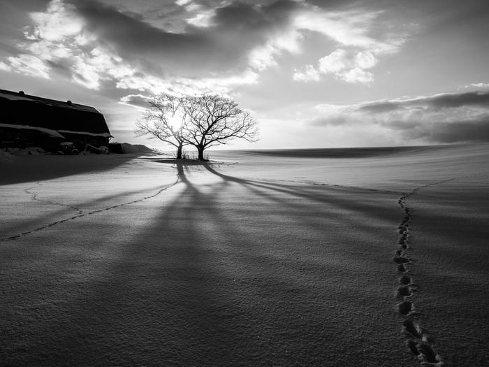 最後は大自然の中の写真。やはりこちらも、モノクロ写真の持つ静けさと、自然の雄大さがとても良くあっています。伸びる木の影と、雪のサラサラとした質感がとても美しい作品です。