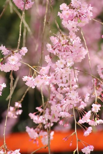 「みあれ(御阿禮)」とは、葵祭の先立って行われる神迎えの神事のこと。神事の時にこの下を神幸することから名付けられました。