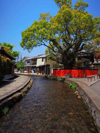 【画像は、上賀茂神社の東側に広がる「社家町」。趣ある神官邸宅が建ち並ぶ文化遺産の屋敷街です。】