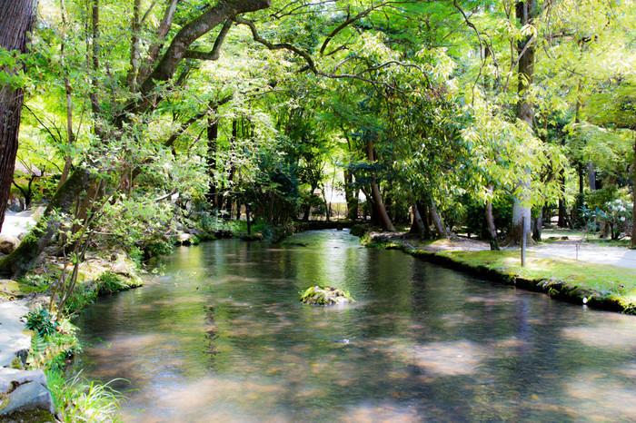 参拝が終わったら、小川のせせらぎと共に歩いて上賀茂神社を後にしましょう。川辺には、紹介した「片岡社」の他にも、交通安全の神様「岩本社」や飲食業の神「奈良神社」、病気平癒の神様「山森社」といった摂末社が点在して、緑と水辺の景色を楽しみながら参拝できます。