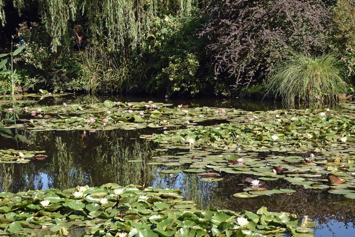 モネと言えば睡蓮。睡蓮をモチーフにした作品は多く、その中でもオランジュリー美術館の壁をぐるっと囲んでいる絵画「睡蓮の間」は、モネの絵画世界の粋を凝縮した名作と言えるでしょう。このジヴェルニーの睡蓮の池は、モネが造園した人工の池です。