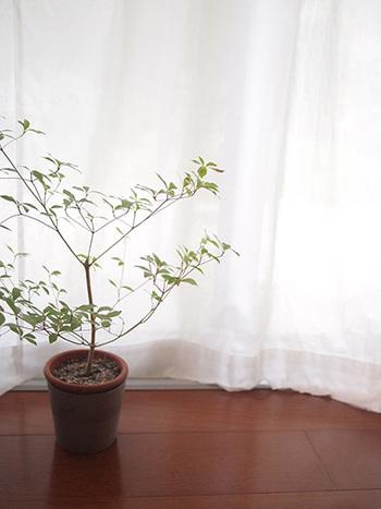 部屋やベランダにおいている観葉植物。虫が寄ってきたら嫌ですよね。マジックソープは香りの成分で虫よけとして使えますよ。ペパーミントなど、虫が嫌う香りにすると効果は高いです。マジックソープは薄めてくださいね(水1ℓに対して大さじ1)。