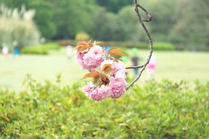 広い芝生広場はピクニックにぴったり。他にも、バラ園や花しょうぶ園など小旅行気分が味わえます。