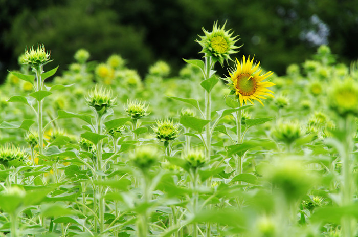 季節ごとの花も見ごたえたっぷりで、夏はひまわり畑とアジサイが楽しめます。また夏の季節は巨大屋外プールもオープン! 流水プールや大波プールなど9つのプールとウォータースライダーで思う存分遊んじゃいましょう。