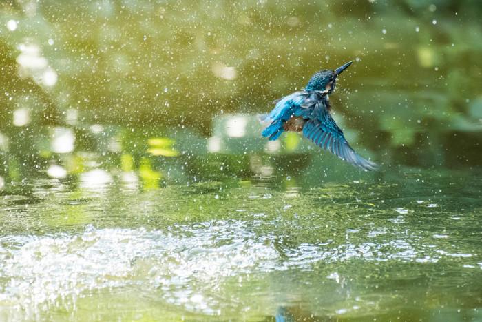 水辺をよく観察すれば……、るり色の羽がキラリ! 小魚をとらえるカワセミの姿を見ることができるかも。都内なのに、豊かな自然が残っています。