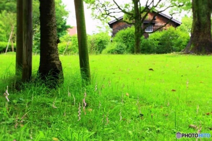 野原に咲くネジバナ。初めてみた時、存在のかわいさに打たれました♥