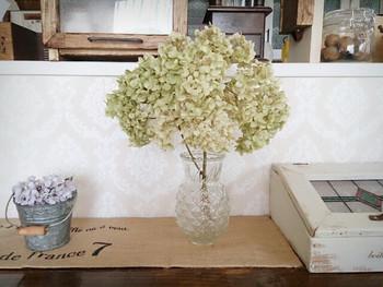 白いアナベルのドライフラワーをガラスの花瓶に挿して。丸いボリューム感がかわいいですね。