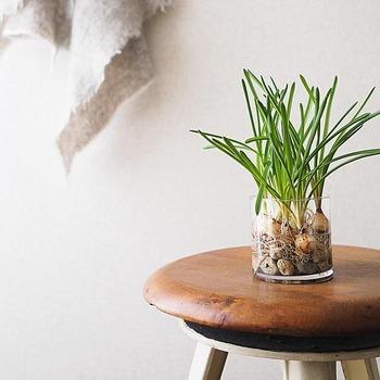 植物が好きな方なら、グラスを植木鉢代わりに使ってみるのもおすすめです。