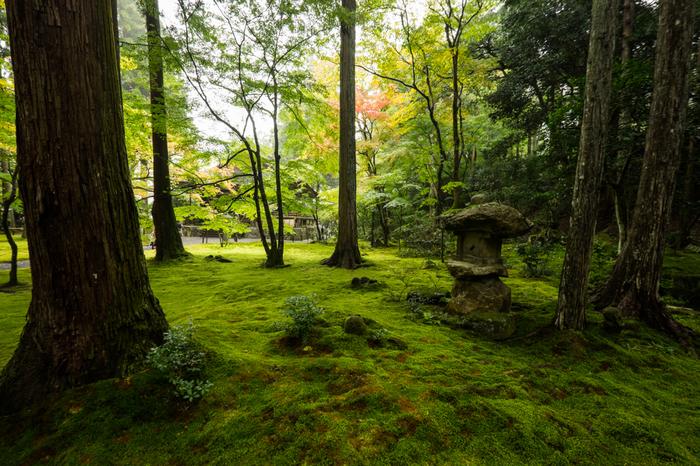 極楽往生院を囲む庭園の美しさには思わずため息が出るほどです。石燈籠、苔庭、大木が織りなし、極楽往生院周辺では、水墨画のように素晴らしい風景を臨むことができます。