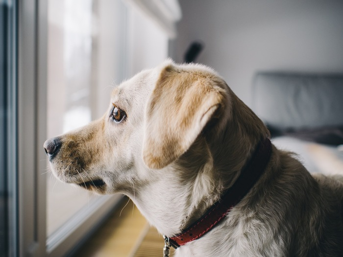 自分の帰りを待っている存在があるということは嬉しい反面、急な飲み会や泊まりは難しくなります。また、散歩をしなくてはならないなど、ペットによっては自分の時間を取られます。