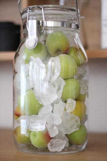 5.瓶は冷暗所で保存し、毎日瓶をふりましょう。