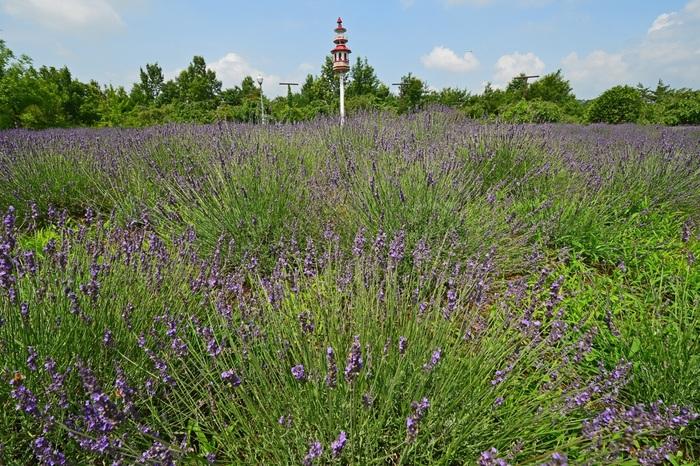 佐野藤岡インターからすぐのところに、「みかも山公園」があります。 みかも山公園ではカタクリの花が有名で、その他にも多くの野草が楽しめます。