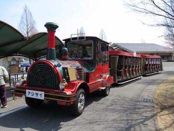 わんぱく広場から、このバスに乗って園内を楽しむこともできます。 わんぱく広場は子供が遊べる遊具もあるので、休日は子供連れの家族に人気です。