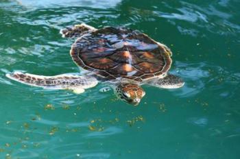 西の浜に産卵にやってくるウミガメの研究&保護をしている施設です。季節によっては、貴重なウミガメ放流体験に参加もできるとのこと!カメさんに会いに行こう~。