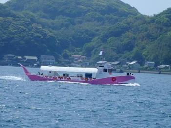 朝市を散策したあとにクルーズはいかがですか?呼子では 2 つのコースを楽しめます。一つめは、泳ぐ魚たちを間近に観ることができる海中遊覧船「ジーラ」。
