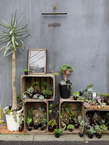 """お店の外には、多肉植物たちがたくさん可愛く飾られています。植物も含めて、お店の""""看板""""なのですね!"""