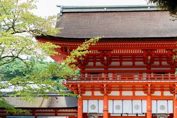 創建が有史以前に遡る、歴史ある下鴨神社。正しくは賀茂御祖神社(かもみおやじんじゃ)と言いますが、鴨川の下流にあるため、上流の上賀茂神社に対し「下鴨さん」と呼ばれ親しまれています。