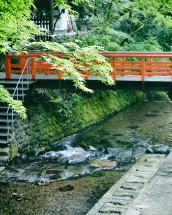 初夏、青もみじ広がる古都で御朱印を授かりに。 のんびり満喫できる新しい京都観光