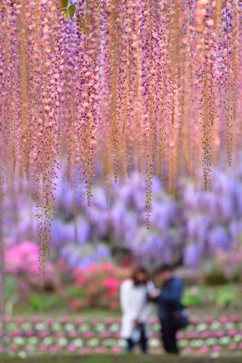 駅からもインターからも近く便利なため、ゴールデンウィークや連休周辺はかなり賑わいます。 園内は広く、色とりどりの花を眺めながらゆったり時間を過ごせます。