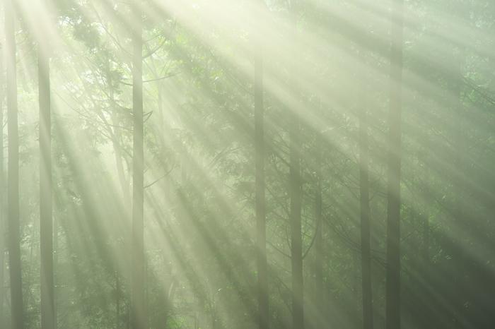 豊かな自然が残る紀伊山地の一部でもある十津川村では、集落から少し足を延ばすと鬱蒼と茂る森が広がっています。温度、湿度、時間帯や天候などの条件に恵まれた場合、深い緑に包まれた森に光芒が差し込む神秘的な景色が現れます。