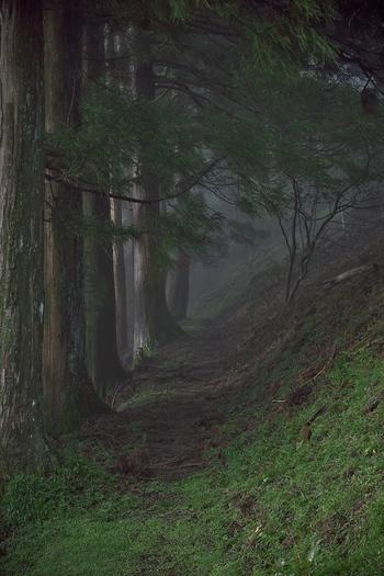 十津川村の一部は、世界遺産「紀伊山地の霊場と参詣道」となっています。世界遺産・熊野古道を歩き、太古より信仰の場として崇められてきた熊野三山を参拝してみるのもおすすめです。