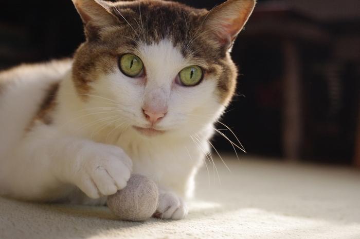 猫ちゃんも興味津々!「あれ?なんだか自分と同じにおいがする・・・」 モフモフの抜け毛を再利用!くるくる可愛い毛玉ボールを手作りしてみませんか?とっても簡単な2ステップで出来ちゃいます。是非チャレンジしてみてくださいね。