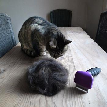 ブラッシングで抜けた毛を集めます。子猫ちゃんなど抜け毛が少ない場合は、お気に入りのビンにストックしてコツコツ集めるのも◎