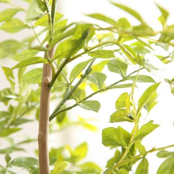 お世話不要で消臭・抗菌効果も!「光触媒 観葉植物」のインテリア例