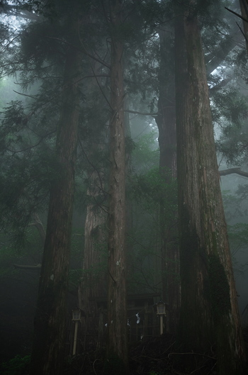 玉置山には、樹齢数百年にもなる杉の巨木が群生しています。日中でも薄暗く天を仰ぐ程の大きい杉の老木が群生している玉置山は深山幽玄とした雰囲気が漂っています。静寂に包まれた玉置山を歩いていると、神々の棲み家に足を踏み入れたような錯覚を感じます。