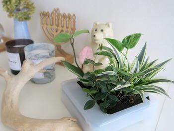 壁にかけられる観葉植物は置き場所を選ばない、無印の隠れた名品です。フレッシュなグリーンがあると、暮らしにいきいきとした潤いが生まれます。