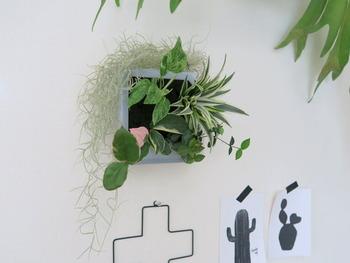 こちらの観葉植物は、給水部分を隠すのにエアプランツをアレンジしています。植物ですから、成長するとかたちが変わってくるのも楽しみのひとつです。全体の印象をみながら、エアプランツを調整してあげるといいですね。
