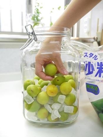 【材料】 ・南高梅 1kg ・氷砂糖 1kg  こちらは子どもから大人までみんなで楽しめる、梅シロップの作り方です。ホワイトリカーを入れないこと以外は、基本の作り方は梅酒と同様です。