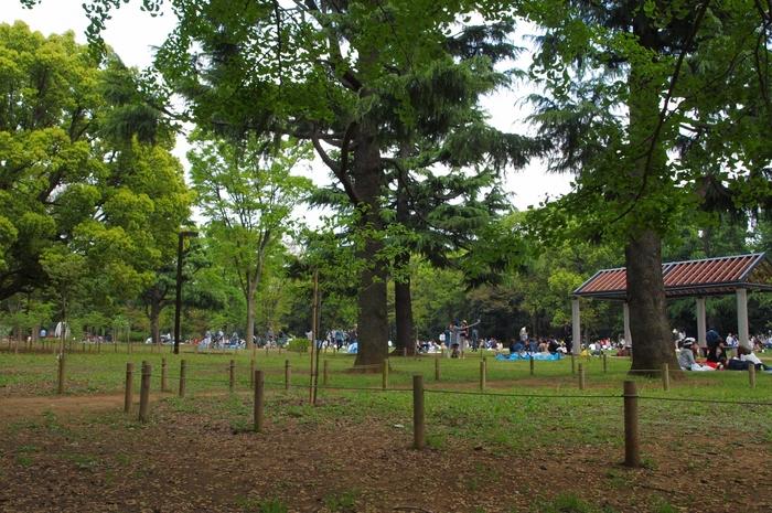 代々木公園ピクニック楽しもう!周辺のおすすめテイクアウトフード