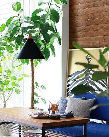 こちらは家具の木材の色が濃い目で、先ほどと同じ青色のソファでもまた違った表情に仕上がっています。ペンダントライトや絵など、ところどころに黒色が締め色になっていますね。濃い緑の植物も活き活きとして見えます。