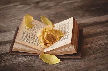 ほかにも、読書をして過ごしてみたり。 読みたい本が溜まっていたら、絶好の日になりますね。