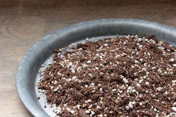園芸用の土にも様々な種類がありますが、初心者さんにおすすめなのは、何も混ぜずにそのまま使える土です。このタイプの土には肥料があらかじめ配合されているため、植物に効率よく栄養が行き渡ります。