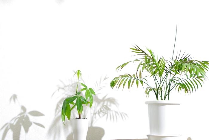 植物を育てることに苦手意識のある方にこそ、今回ご紹介した6種類の観葉植物はおすすめです。心を込めてグリーンを育てて、お部屋に癒しをプラスしてみて下さいね!