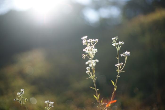 そして、晴れの日はやっぱりひなたぼっこ。ぽかぽかなお日様で一日を明るく過ごしませんか。