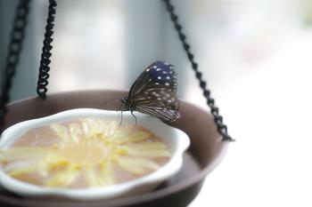 爽やかな風味は、紅茶やコーヒーにもよく合います。 いつものティータイムにもぴったり♪