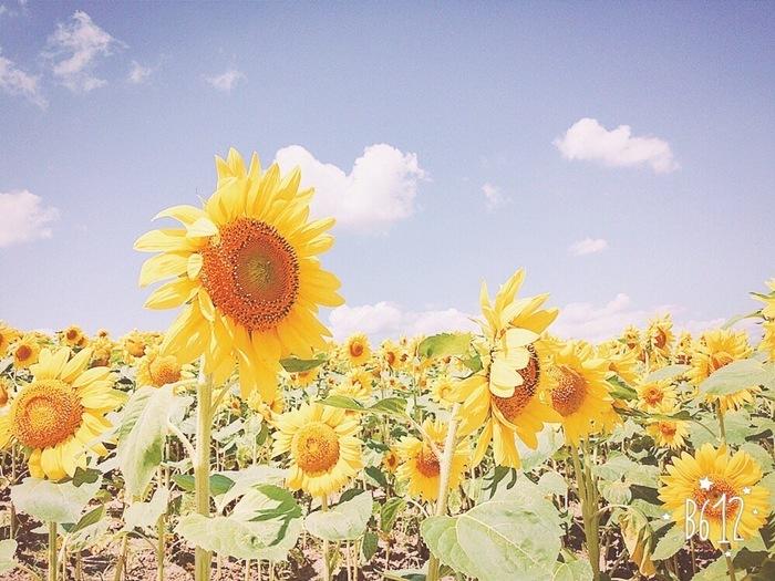 暑中見舞いに限らず、日本の「季節のお便り」にはある程度のルールがありますので、ちょっとだけ注意してください。