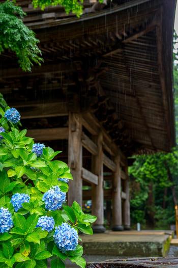 梅雨時季だからこそ楽しめる紫陽花は、丸い愛らしいフォルムが心を和ませてくれます。素敵な北鎌倉の寺院を訪ね、美味しい物を頂きに、北鎌倉に行きたくなりますね。