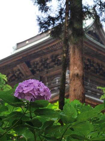 円覚寺の伽藍は、谷に沿ってと徐々に登っていくように配置された山門(三門)、仏殿、方丈と、厳かな雰囲気を醸し出しています。 三解脱(空・無相・無願)を象徴する三門は、煩悩を取り払い解脱の世界仏殿に至る門とされ、夏目漱石「門」の舞台としても知られています。