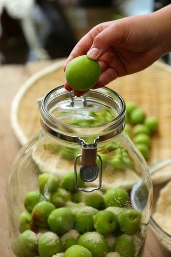 小さめの瓶なら鍋で煮沸消毒できますが、大瓶の場合は、きれいに洗ったあと熱湯を入れて殺菌。瓶は、前もって60℃程度に温めてから熱湯を入れないと、割れる場合がありますのでご注意を。その後は、よく乾かしておきます。そして、漬ける前にアルコールや焼酎などをしみ込ませた布でふきます。