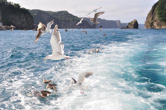 積丹半島は、野生動物の宝庫でもあります。水面ギリギリの位置を羽ばたく白いカモメたちは、積丹ブルーの美しさを引き立てています。
