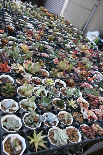 植物・植木もたくさん販売されてます。