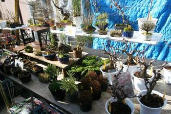 和モダンなインテリアにぴったりな盆栽や苔玉もあります。