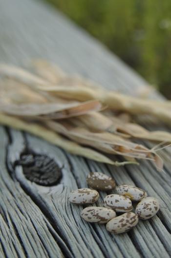 """白いんげん豆の「白花豆(しろはなまめ)」や「大福豆(おおふくまめ)」、「大手亡豆(おおてぼうまめ)」などが""""白い""""豆のグループです。"""